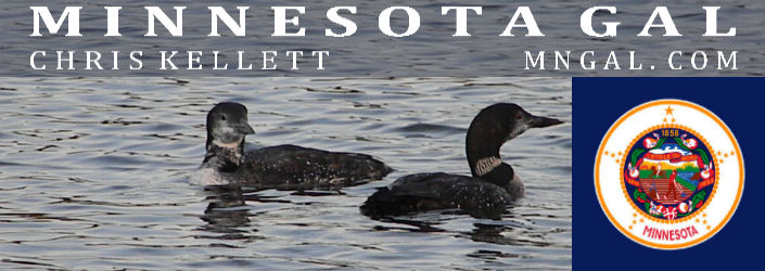 Loons on Gull Lake Minnesota